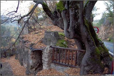 Tilo de la Casa De La Toba (Hoz De Beteta)