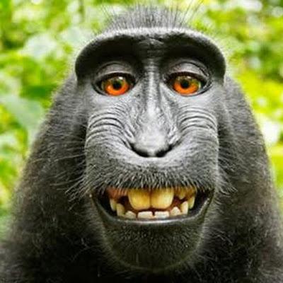ماذا يسمى صوت القرد ؟