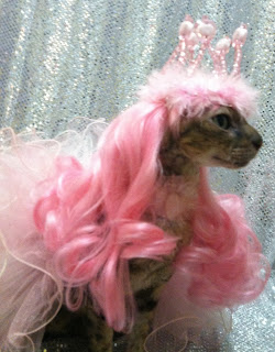 Coco the Couture Cat in Pink Wig and Tiara