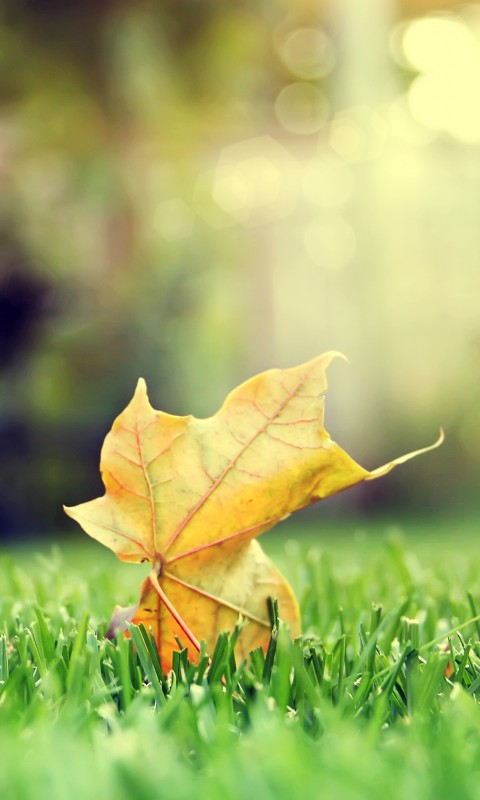 Leaf Hd Mobile Wallpaper Mobile Wallpapers Download Free Android