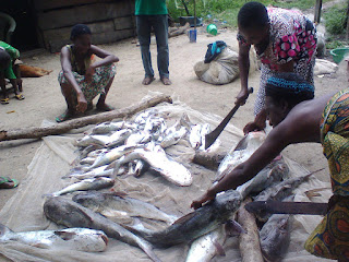"""img Economy-in-recession-niger-delta-and-its-abundance-natural-resources .gif"""" alt="""" Economy in recession: niger delta and its abundance natural resources """"> </p>"""