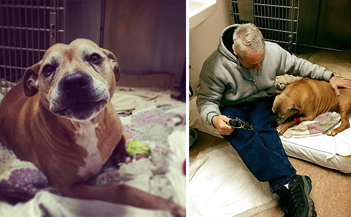 40 Times 2016 Restored Our Faith In Humanity - Homeless Man Can't Afford His Senior Dog's Life-Saving Treatment, So This Stranger Covers It In Full