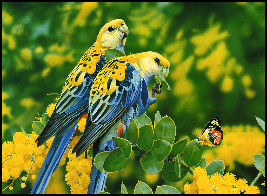 Love Birds Hd Wallpapers And Images Free Download: Beautiful Wallpapers And Images: Beautifull Love Bird