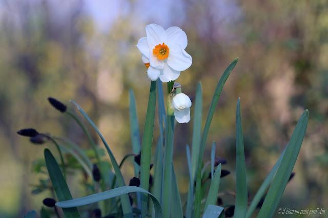 fleurs blanches coeur orange