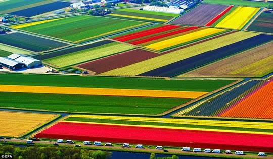 Wallpaper Taman Bunga Terindah Di Dunia
