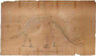 Stegosaurus reconstruido por Marsh y publicado en American Journal of Science