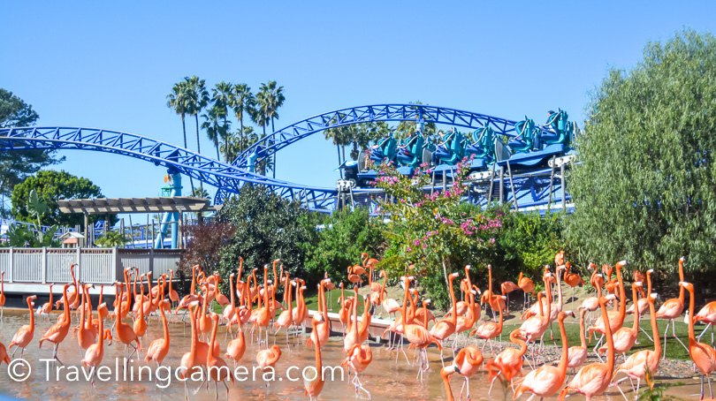 There is one huge section in Sea World dedicated for flamingos. And just above this space you can see roller coaster of the Sea World. If you want to have a ride, there are lockers available to put your stuff and go for the ride. Each locker charge is $1.