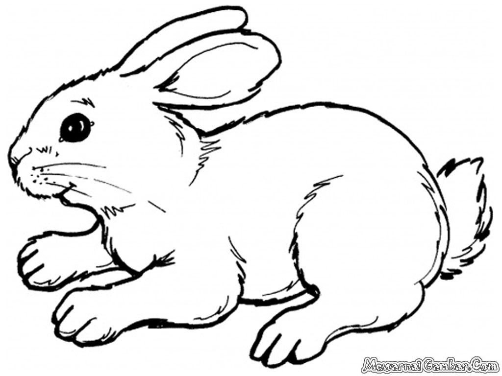 Download Gambar Mewarnai Kelinci