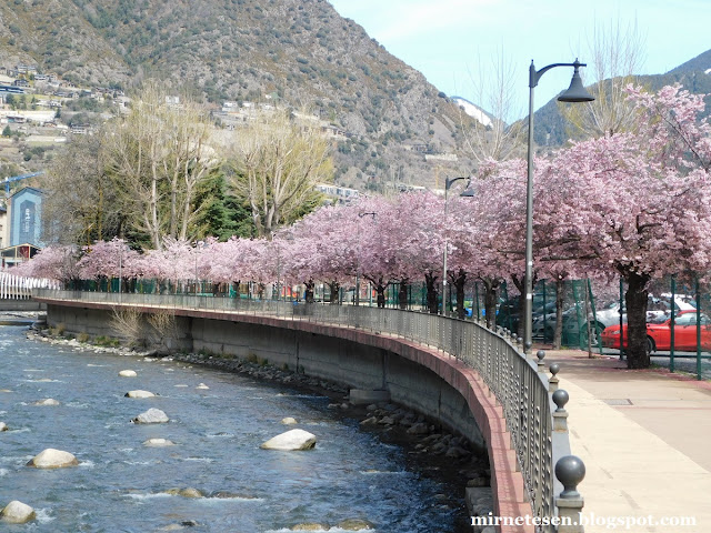 Андорра-ла-Велья - цветущие вишни у реки Гран Валира