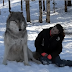 Enormous Wolf Sits Beside Woman, But Watch What Happens When They Make Eye Contact