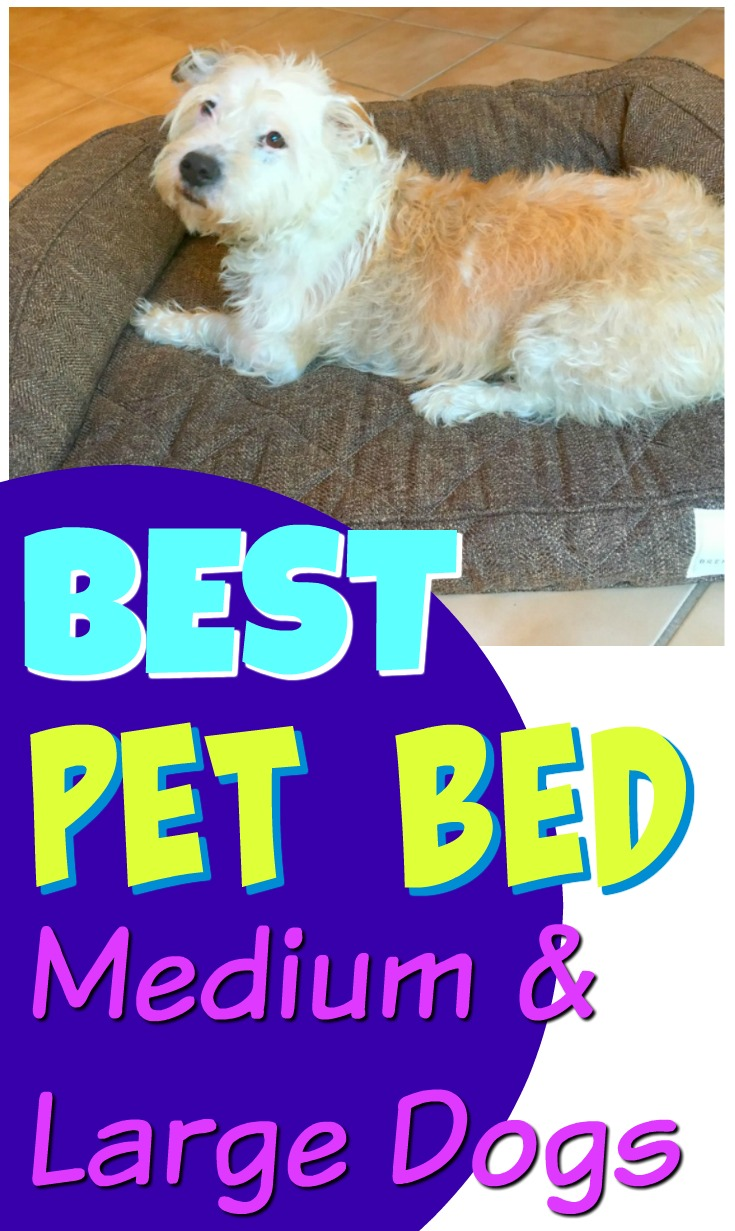 Best Pet Beds for Medium and Large Dogs