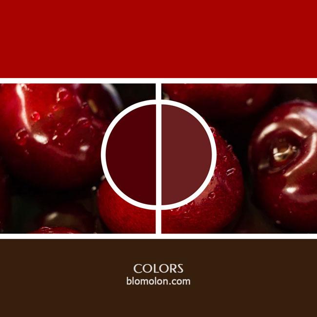 variedad_en_color_color_18