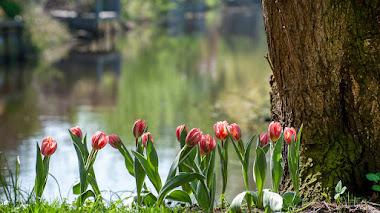 La primavera está en el aire y las flores a ras de suelo