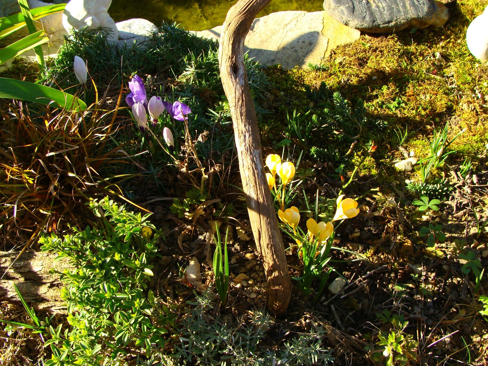 Jardine et ris le retour du service midi terre for Jardin jardine