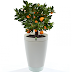 Smart Flowerpot That Will Tell You When To Water Your Plants
