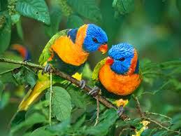 صور طيور ملونة جميلة جدا Birds HD Wallpapers