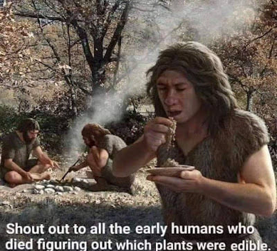 Shout out to all the early humans who died figuring out which plants were edible