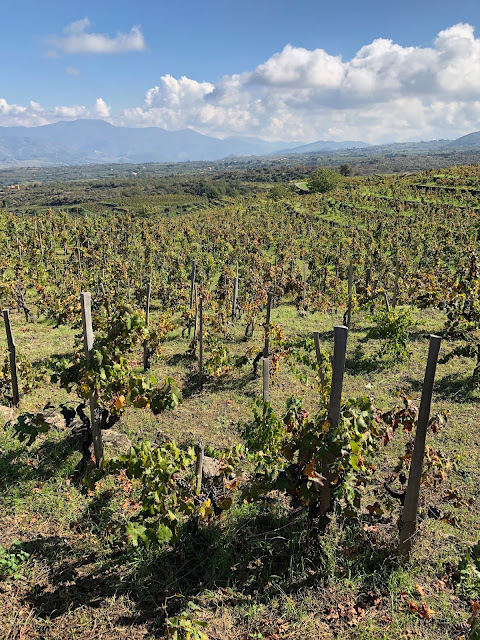Passopisciaro Vineyards in Contrada Guardiola, on Mt. Etna, Sicily.