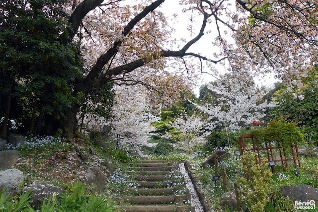 福岡市植物園、福岡