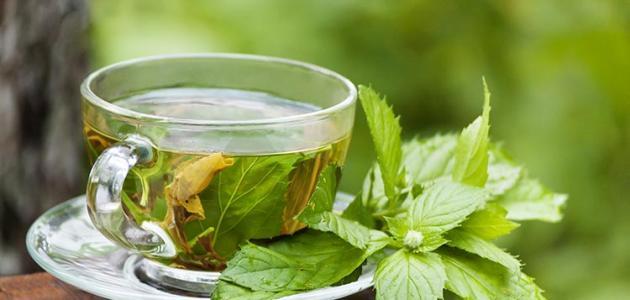 الفوائد الصحية للشاي الأخضر لا يقلل الوزن فقط بل يساعد في تسهيل عملية الهضم وينشط الجهاز التنفسي كما أثبتت الدراسات العلمية مؤخرا