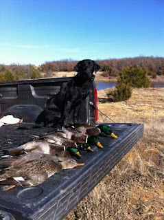 north texas duck hunting/north texas duck hunts/north texas retriever trainers/north texas dog trainers