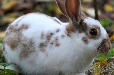 تربية الارانب,جص الأرانب,الارانب,فطام الأرانب,صغار الأرانب,تزاوج الأرانب,ولادة الأرانب,تلقيح الأرانب,أمراض الأرانب,فيروس,بطارية الأرانب,امراض الارانب,عمر الأرنب,جص الأرنب,عش الأرنب,فحص الأرنب,بيت الأرنب,غذاء الأرنب,طعام الأرنب,فطام الأرنب,للإمساك بالأرنب,علاج الارانب,تربية الأرنب,تغطية الأرنب,تربيه الارانب,الأرنب الحامل,طريقة حقن الأرانب,تربية الأرانب في المنزل,أرانب,الفروسى الارانب,تربية الارانب على الارض,برنامج تحصين الأرانب,مشروع الارانب,أمراض الأرانب وكيفية علاجها,الجنس في الارانب