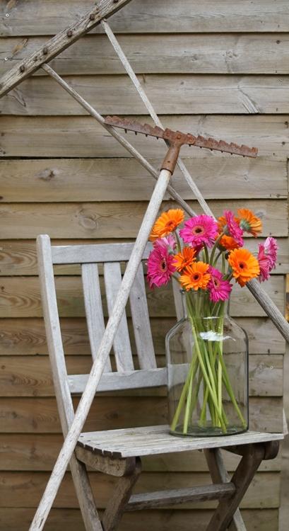 Pinke und orangerabene Gerbera auf einem Holzstuhl { by it's me! }