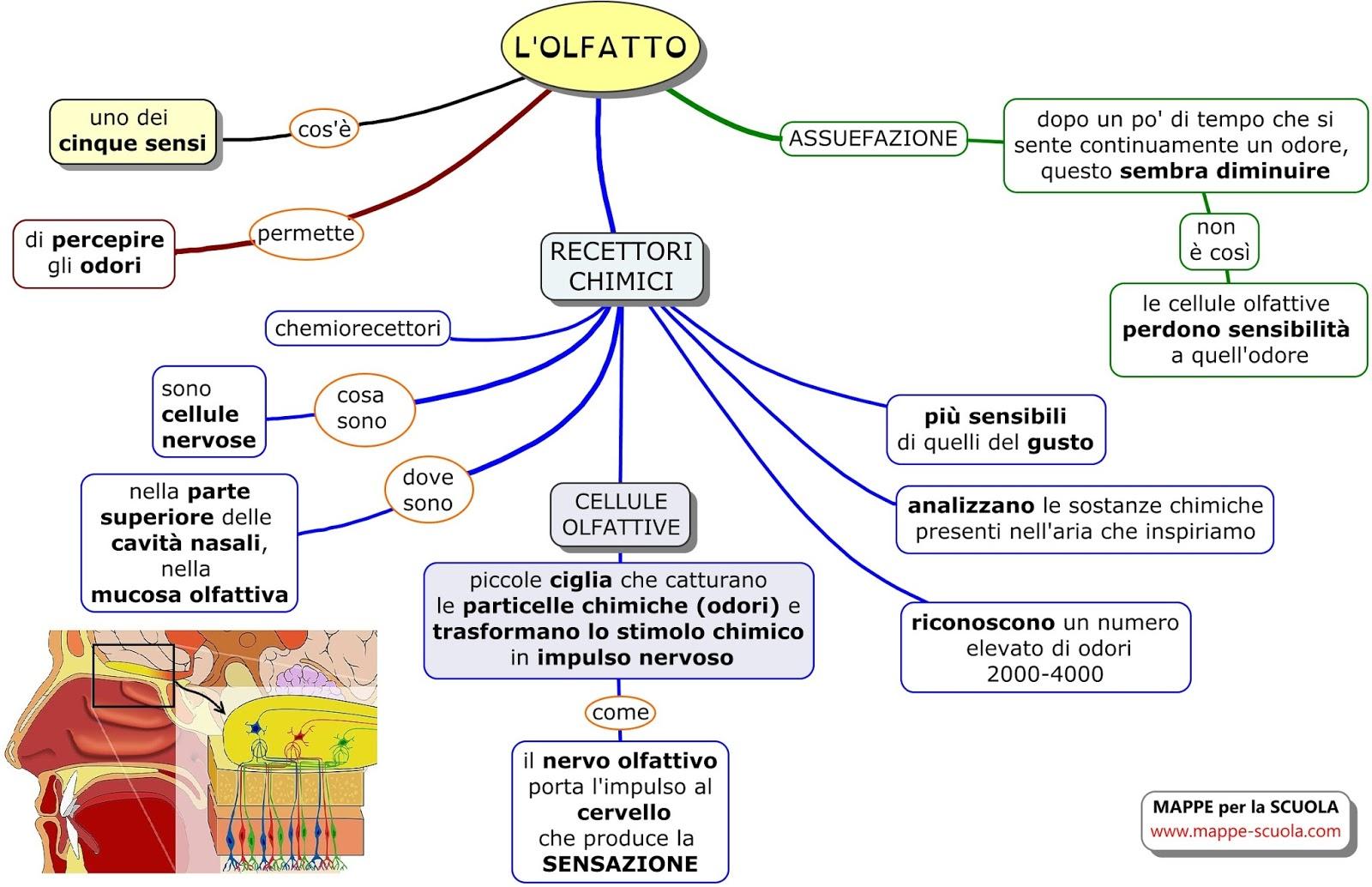Estremamente MAPPE per la SCUOLA: L'OLFATTO EZ07