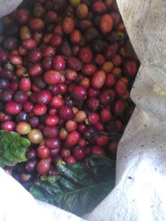 gambar kopi bubuk semendo