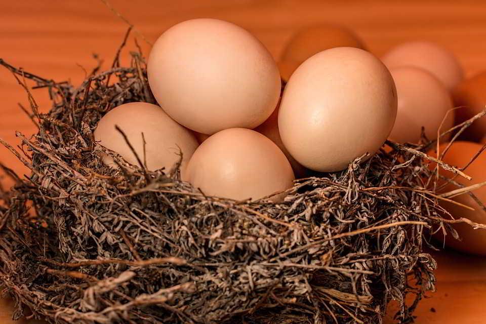 Telur Cemilan Terbaik Untuk Menurunkan Berat Badan