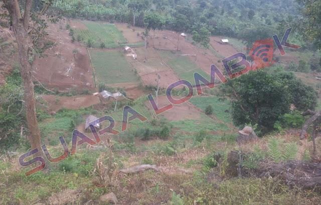 Hutan TNGR Dibabat Warga Tidak Bertanggung Jawab