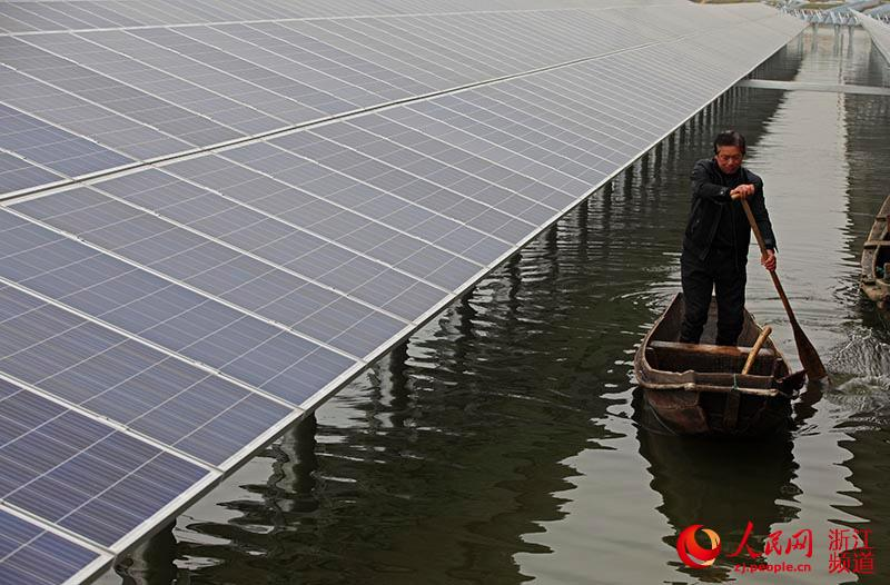 China Builds A 200 Mw Solar Power Plant On Top Of Fish Farm In Zhejiang
