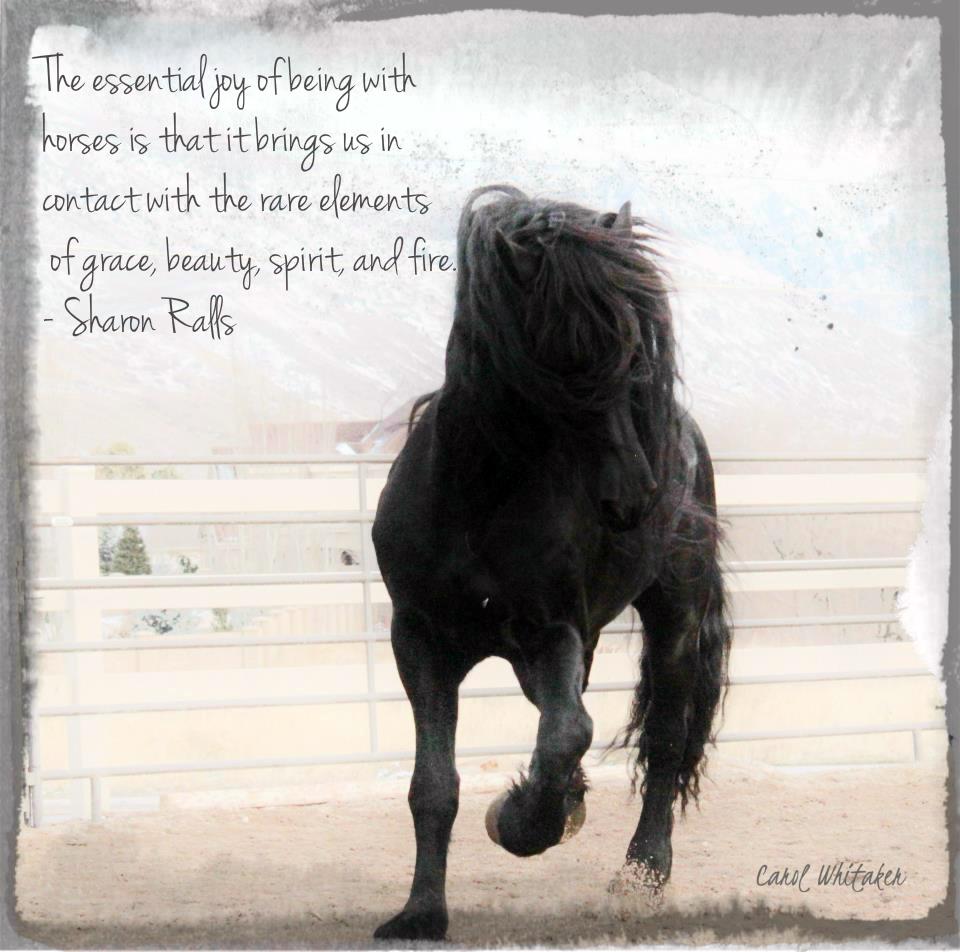 Beautiful Horse Quotes | Cowboy Magic - Cowboy Magic