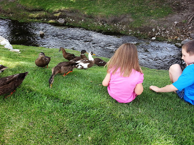 BabcoUnlimited.blogspot.com - Family, Feeding the Ducks