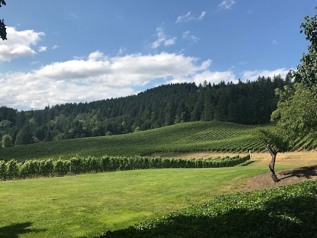 Photo of David Hill Vineyard