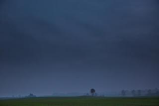 Arbre solitaire avant l'orage
