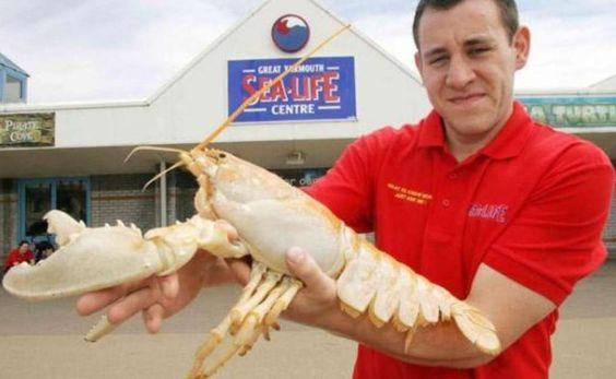 Lobster | A-Z List of 125 Rare Albino Animals [Pics]
