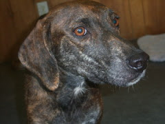 7/16/11 Dog and Cats on Deathrow Indiana. Clic on Pic.