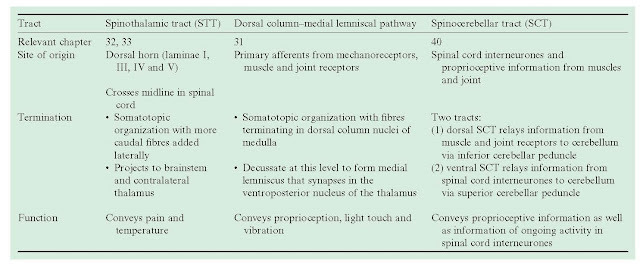 Sensory Systems: An Overview, Sensory receptors, Ascending sensory pathways in the spinal cord, Sensory pathways,