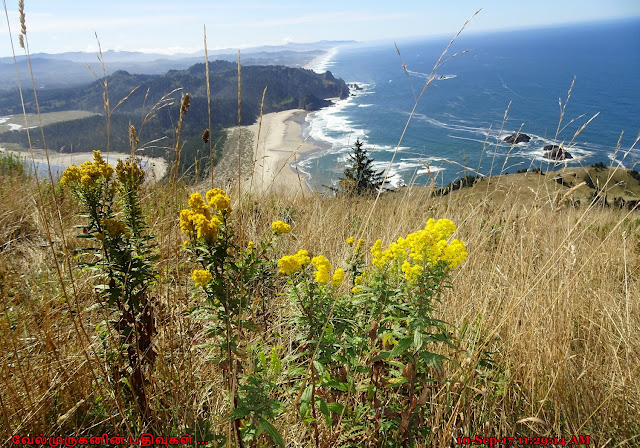 Cascade Head Scenic-Research Area