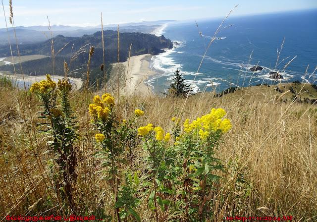 Cascade Head Scenic-Research Area