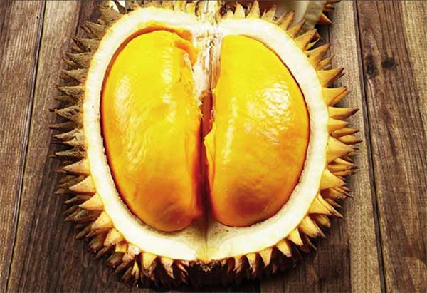 Sejarah Durian Di Indonesia Dan Asal Usul Durian
