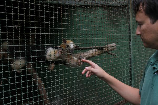 Antes, um tamanduá-mirim chegava por ano, ao Cetas. Hoje, a média anual é de oito a nove (Foto: Evandro Veiga/Correio)