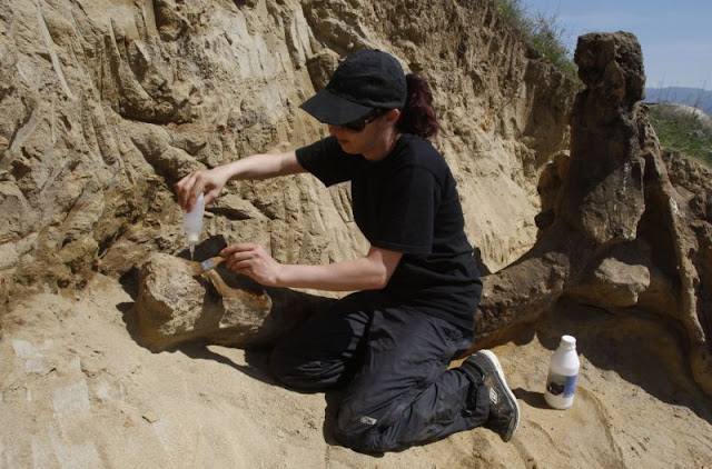 8 million-year-old elephant-like remains found in FYROM