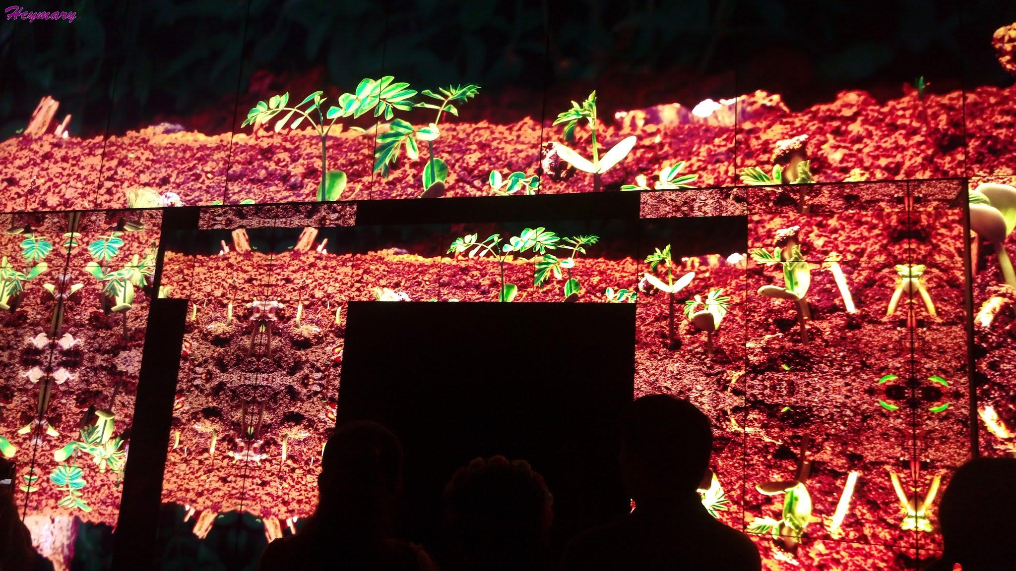 臺中世界花卉博覽會(后里森林園區)