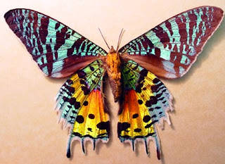 13 hewan paling cantik di dunia