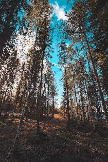 Sauna in Rovaniemi