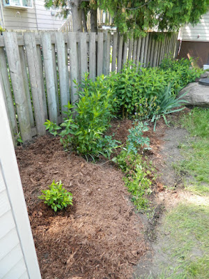 Toronto Riverdale back yard garden clean up after by Paul Jung Gardening Services