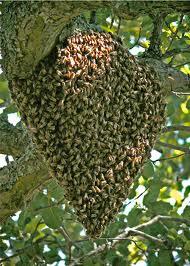 swarming التطريد