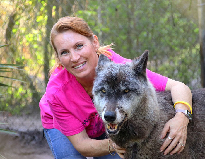This Sanctuary Rescued A Wolfdog That Was Dumped At A Kill Shelter By His Owner